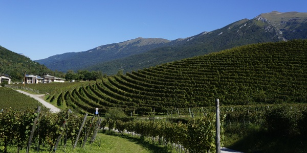 The vineyards at Luch