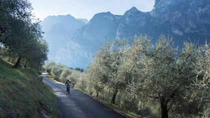 The ascent to Monte Brione between the olive trees with Lake Garda in the background
