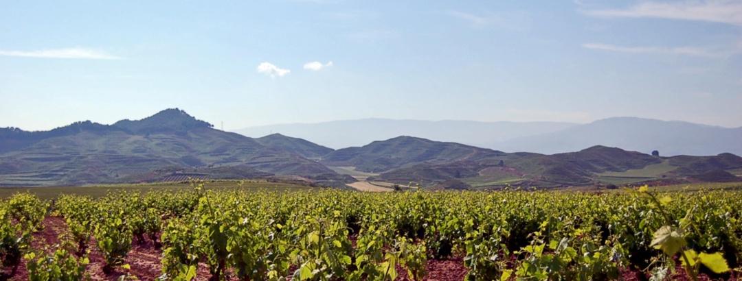 Weinberge in Rioja