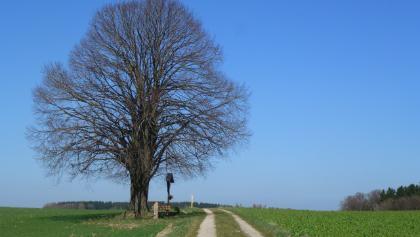 Aussichtspunkt nach Schönau