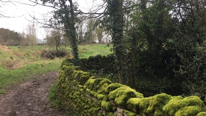 Green moss by stream