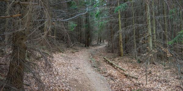 A Kőszegi-hegységben őshonos fenyvesek is találhatók