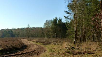 Langenberg gezien vanaf de Arnhemseweg
