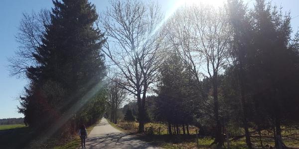 Via Julia zwischen Grünwald und Sauerlach