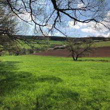 Picture of Hiking Trail: Henschtal - Eichhörnchenweg im Hodenbachtal • Palatine Uplands and Donnersberg (17.04.2018 09:55:09 #2)