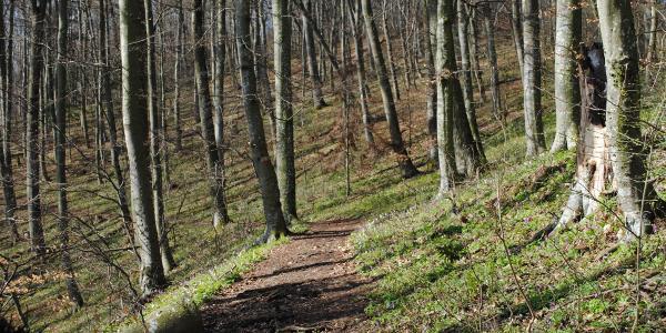 Frühling im Wald 01