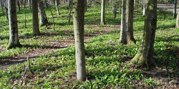 Frühling im Wald 02