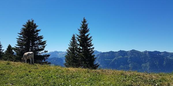 Panoramaweg Baumgarten