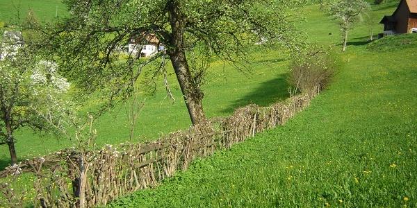 Heckenlandschaft Feusisberg