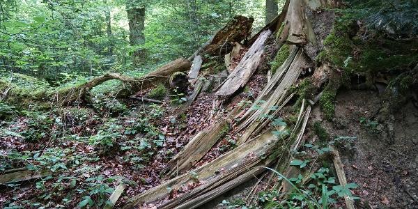 Totholz ist ein wertvoller Lebensraum und eine Nahrungsquelle