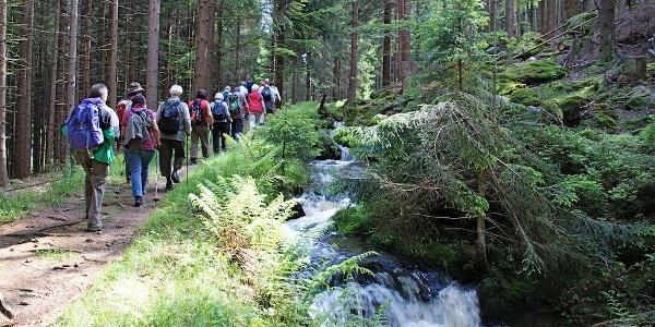 Wandergruppe unterwegs am Mühlgrabenweg