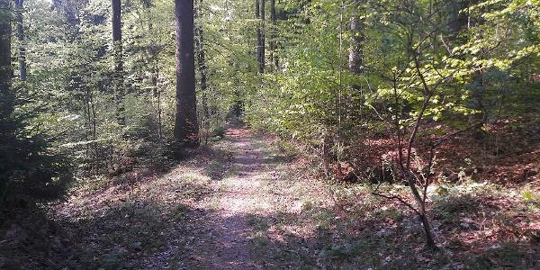 Wanderweg nach Loderwinkl