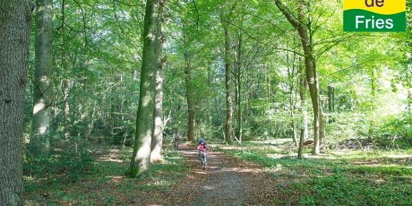 Radeln durch den Neuenburger Urwald