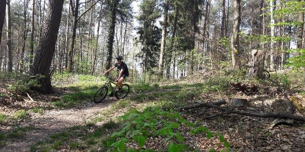 Trailabschnitt bei Löwenstein