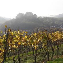 Beim Aufstieg: Blick über den Weinberg zur anderen Hangseite mit der Ebernburg