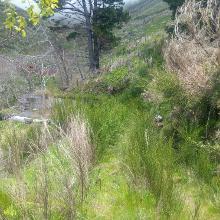 Im Abstieg vom Chao dos Terreiros - zugewucherter Wege