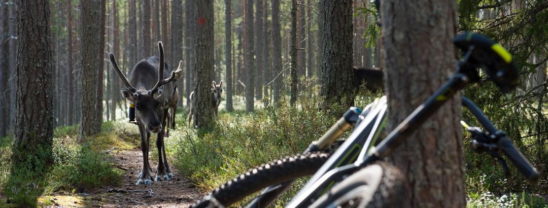 Radfahren mit Begegnung