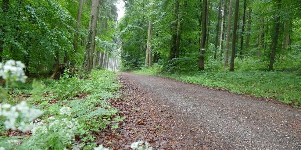 Wanderweg Locherholz