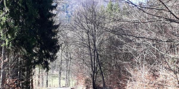 neue Straße zwischen Nothweiler und  Col du Schaufelshald