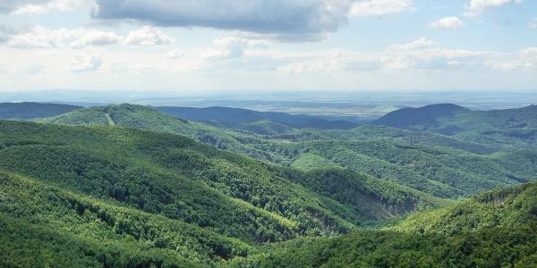 Rozsiahle lesy z rozhľadne na Csóványosi kilátó