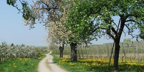 Genießerweg Nonnenhorn
