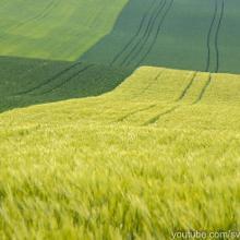 Wunderschöne Felder im Mai.