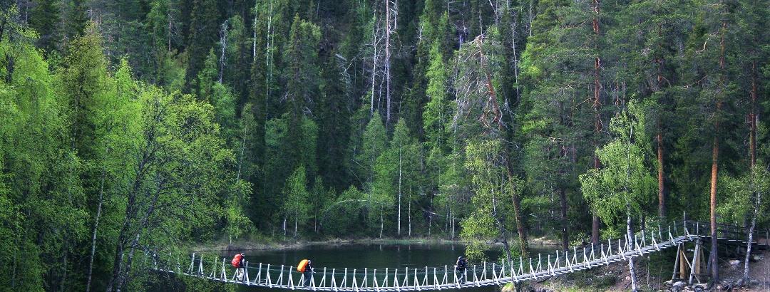 Wanderer auf der Hängebrücke bei Harrisuvanto im Oulanka Nationalpark
