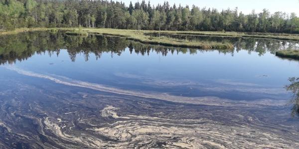 Moorsee Chamlupska slat