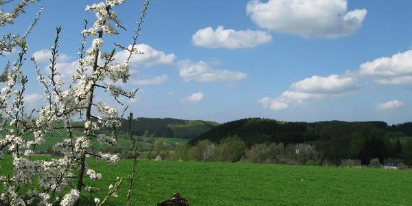 Blick vom Süllberg