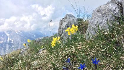 Wunderbare Flora im Gipfelbereich