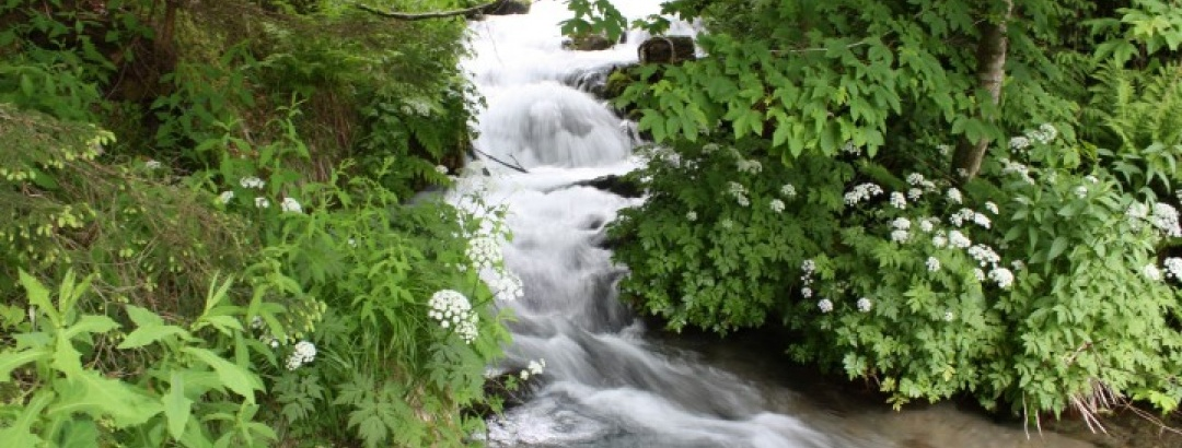Der Tiebelbach am Weg zum Poitschacher Graben, Blick nach Norden