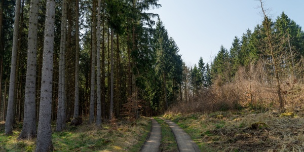 Weg zwischen Almsfeld und Hexenstieg