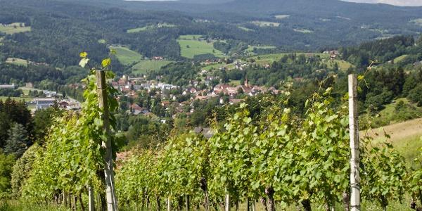 Weingärten bei Ligist