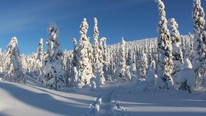 Schneeschuh-Trail
