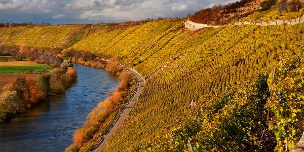 Goldene Weinberge am Neckar