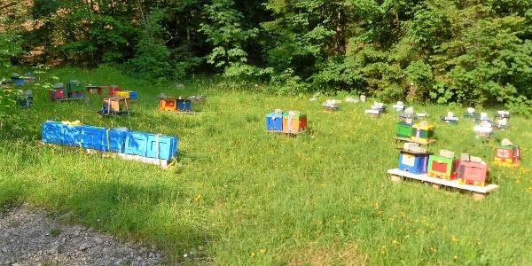 Bienenzucht oberhalb des Lödensees