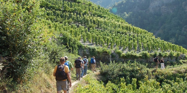 Hike through Europe's highest vineyard