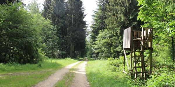 Forst Liptingen-Heudorf