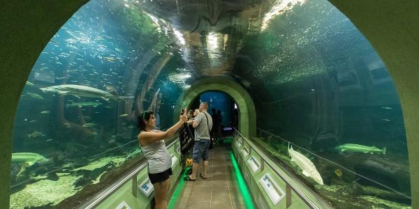 A Tisza-tavi ökocentrum akváriuma