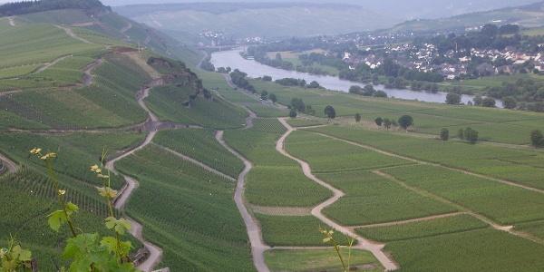 Berühmte Mosel-Weinlage: Brauneberger Juffer