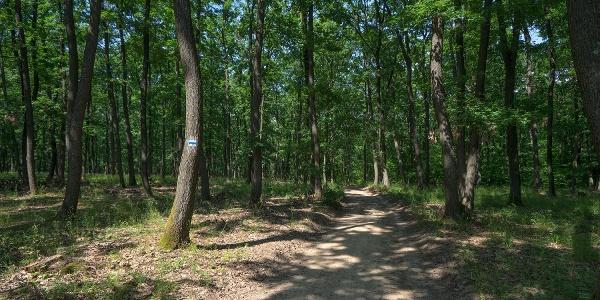 A löszös-cserjés szakasz után erdő következik
