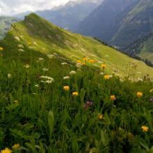 Alpenflora und Bergsicht erster Klasse