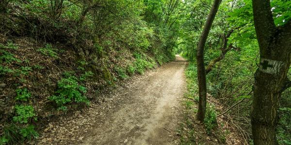 A Guckler Károly út sétánya
