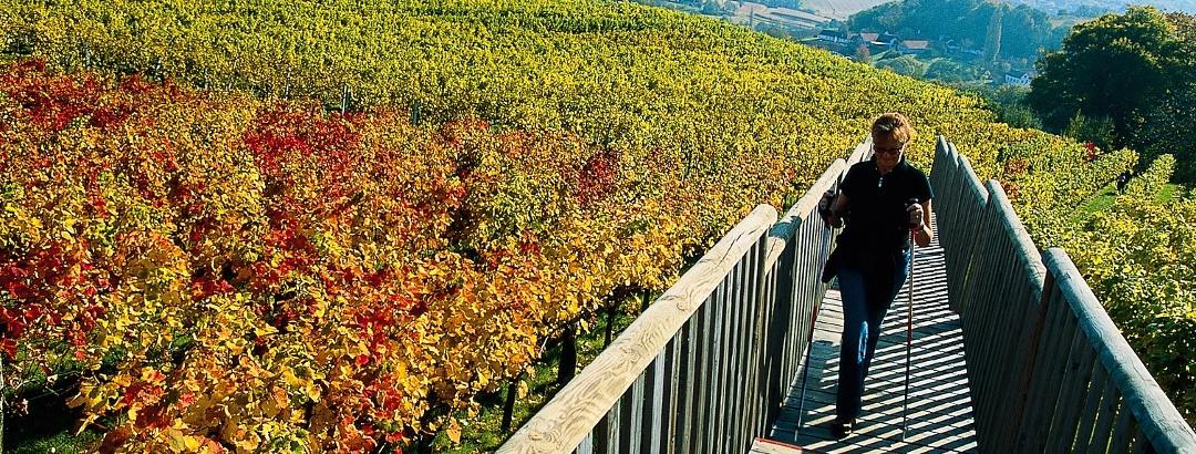 Am Weinweg der Sinne