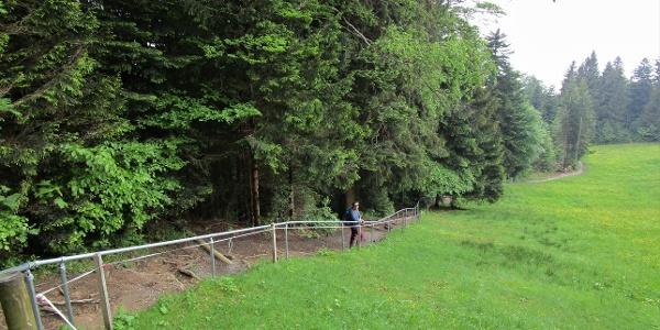 Zwischen Wald und Wiese führt der Weg ins Tal