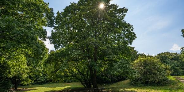 Pihenő a fa alatt