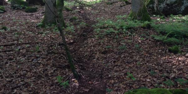 Tierpfad folgt dem ehemaligen Lauf des Wasgaubrunnen