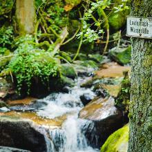 Lauterbacher Wasserfall