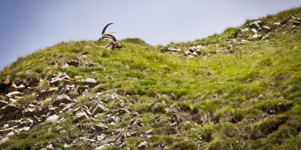 Keep your eyes peeled for ibex and marmots!