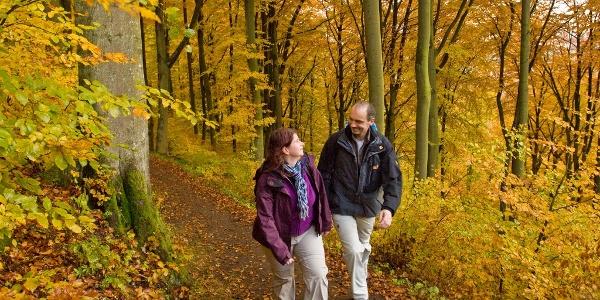 Eifel-Wanderer im Herbst_Vulkaneifel-Pfad: 2 Bäche-Pfad